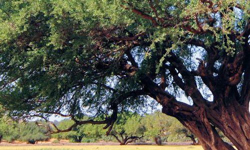 Linea Argà Nature's prodotti con Olio di Argan